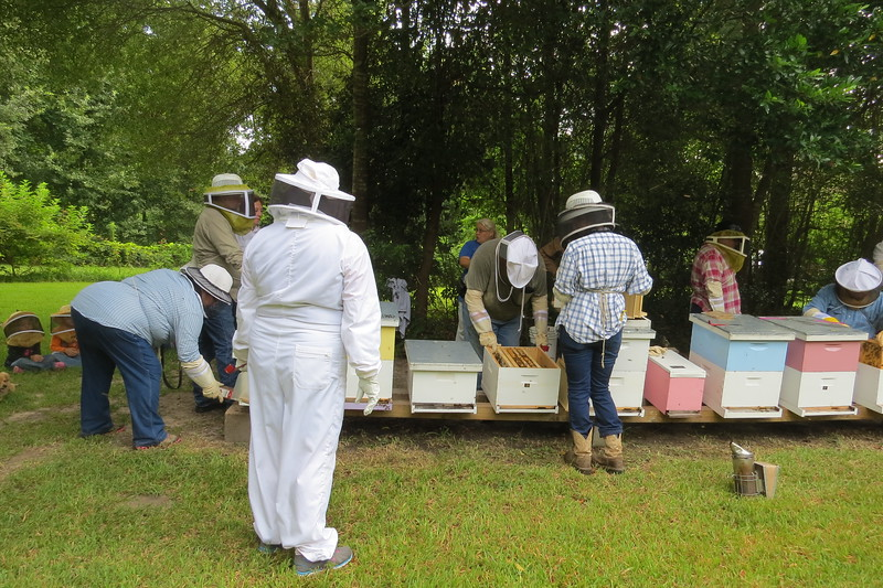 beginning to work back row of hives.JPG