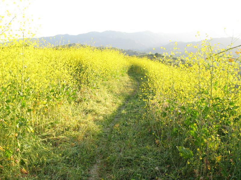 20080417013-New Millenium Trail, trailwork.JPG