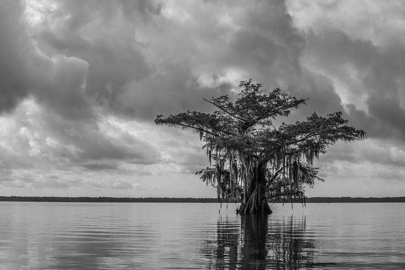 Cypress_Swamps_1117_PSokol-2122-Edit-Edit.jpg