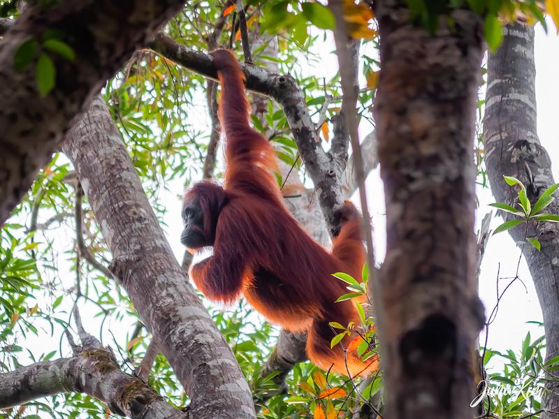 2012.10.07_Borneo_DSC_6826-Edit-Juno Kim.jpg