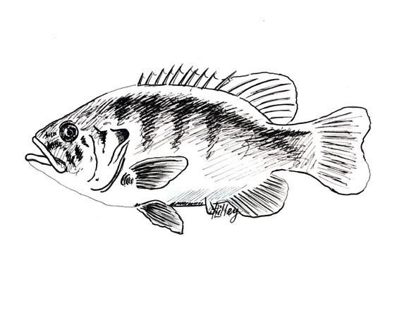 Refl on Pond161 - 72 dpi.jpg