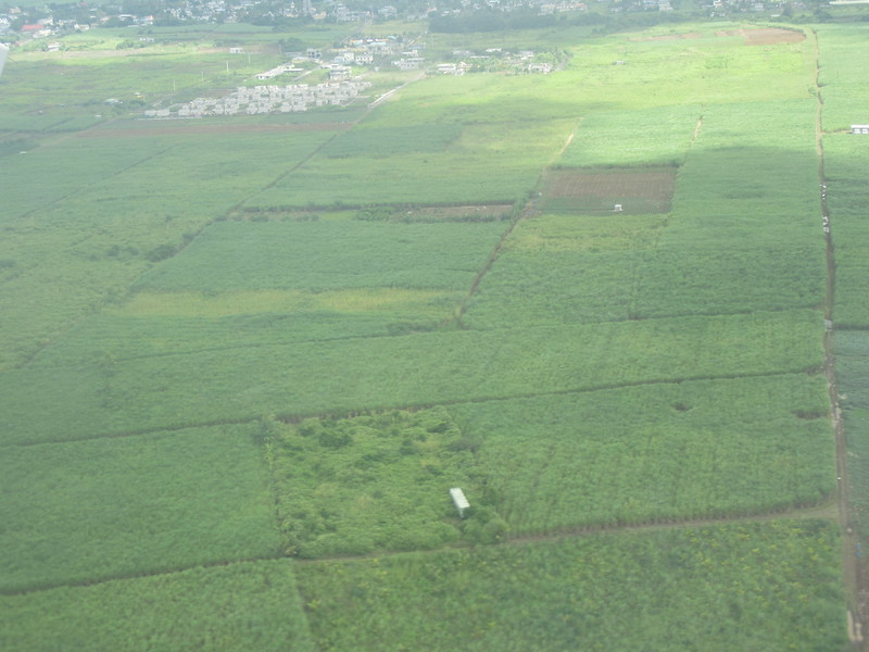 011_Sugar Cane Industry. 600,000 tons per year. 2nd. biggest industry (after tourism).JPG