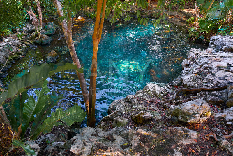 Cenote sinkhole in Riviera Maya of Mexico