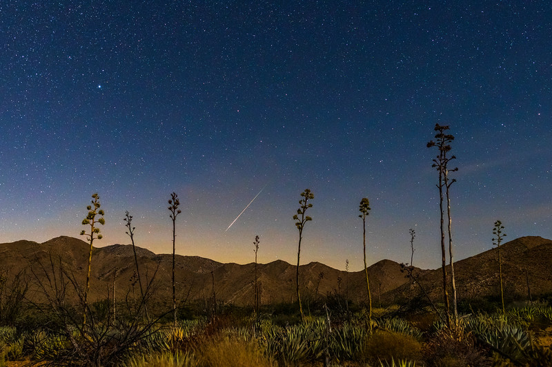 Perseid Meteor Over Agave in Anza-Borrego Desert State Park.