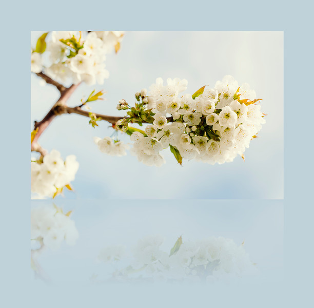 Promises-Reflections.jpg