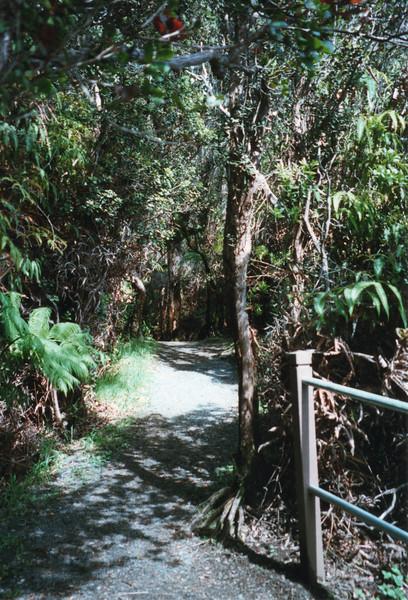 199805-hawaii-05100.jpg