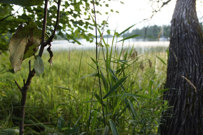 2011 Aug 11_DSC04730.jpg