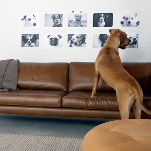 Bryght Furniture and dogs