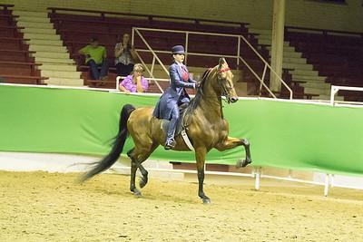 73 - Saddle Seat Equitation 18 & under