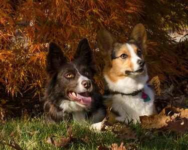 Jack & Rosie