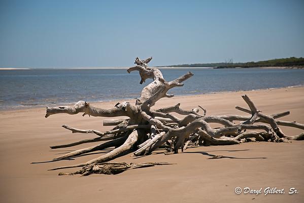 Boneyard Beach, Big Talbot Island