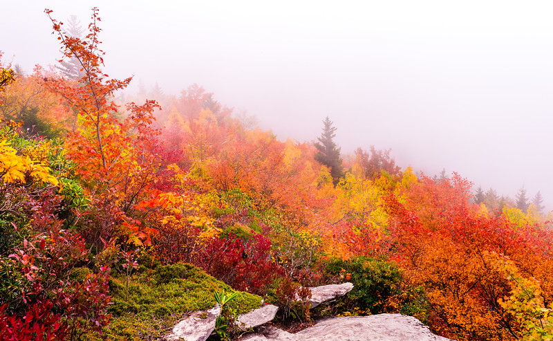 Rough Ridge Foggy Fall Colors