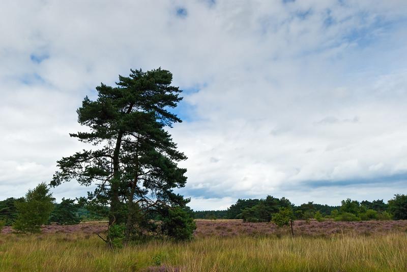Natuurreservaat Ziepenbeek (B)_Wandeling met Danny en Chantal-40.jpg