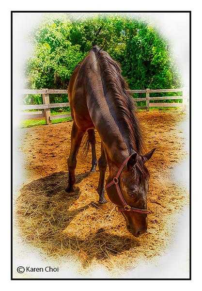 grazing horse sm.jpg