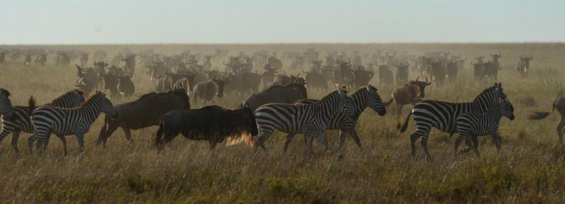 East Africa Safari 313.jpg