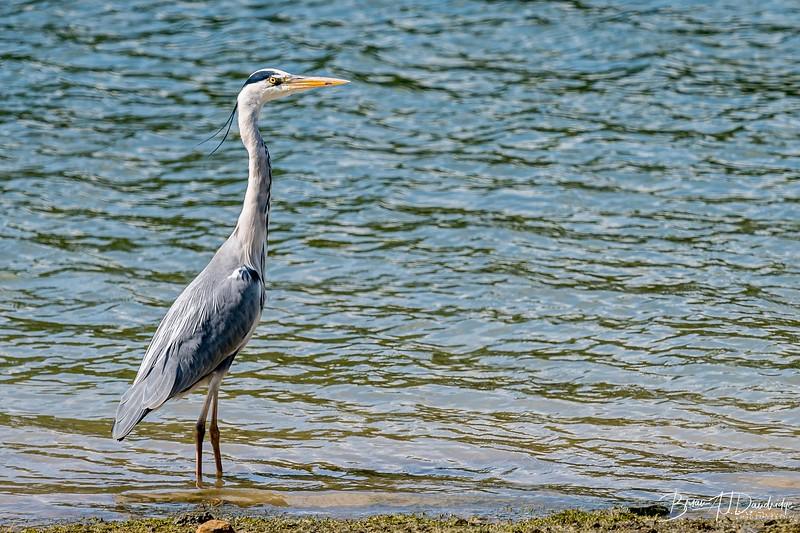 Ardingly Reservoir-8264.jpg