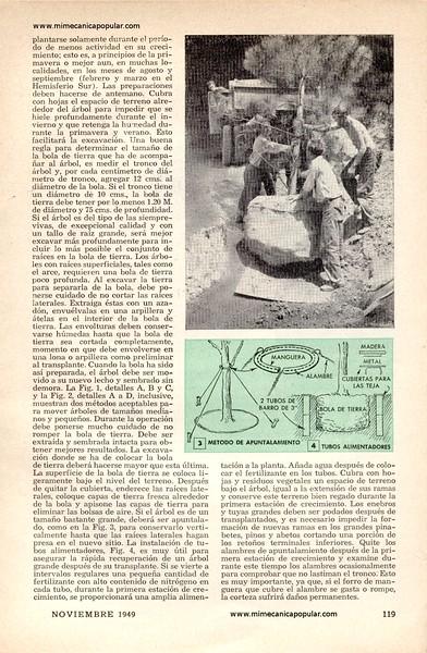 dia_de_mudanza_para_arboles_noviembre_1949-02g.jpg