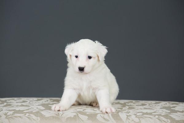 Puppy Rescue 2014