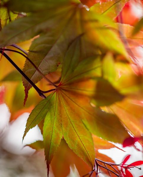Flowers 4-11-20-045.jpg