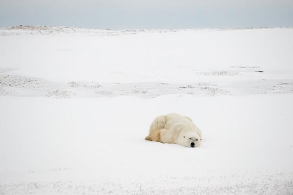 Arctique 2014