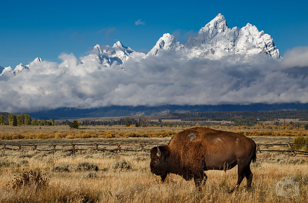 The Grand Tetons Collection