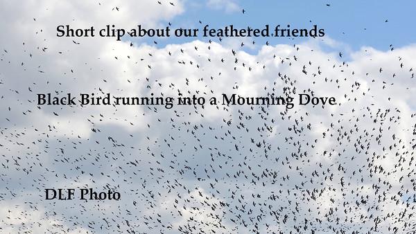 Birds in Flight videos