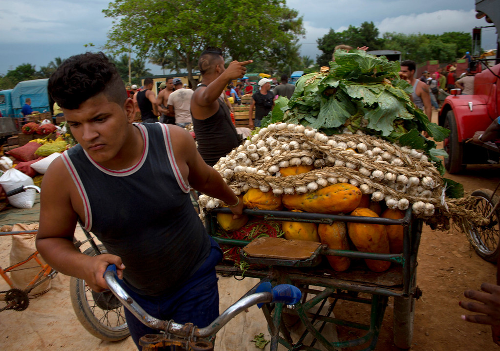 . In this Sept. 30, 2013 photo, a young man pulls his tricycle loaded with fruits and vegetables at the 114th Street Market on the outskirts of Havana, Cuba. Restaurateurs and street vendors shop there. So do individual consumers, families and even groups of neighbors who pool their money to buy in bulk. (AP Photo/Ramon Espinosa)
