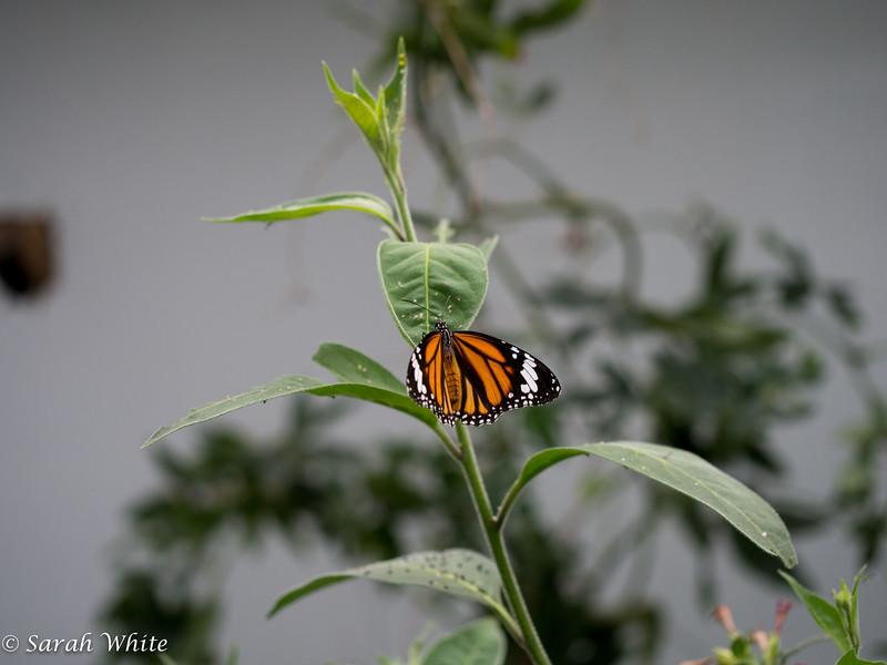 140503_ButterflyHouse_249.jpg