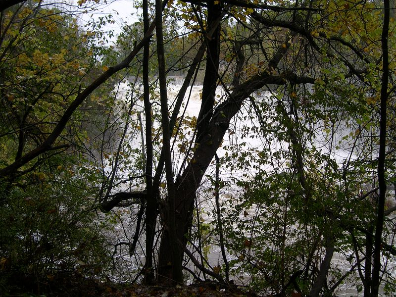 Great Falls as seen through the trees