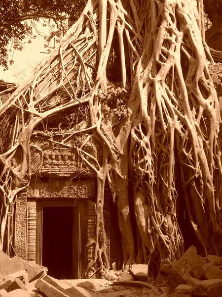 Winding Roots at Ta Prohm - Angkor, Cambodia