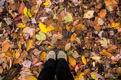 Zona in Autumn