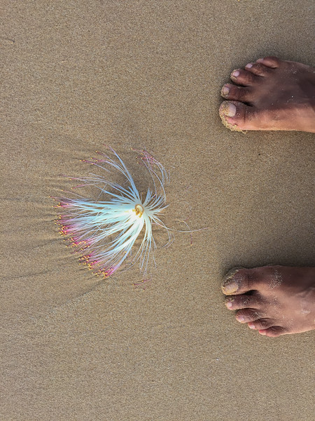 Sri_Lanka-iphone17-9086.jpg
