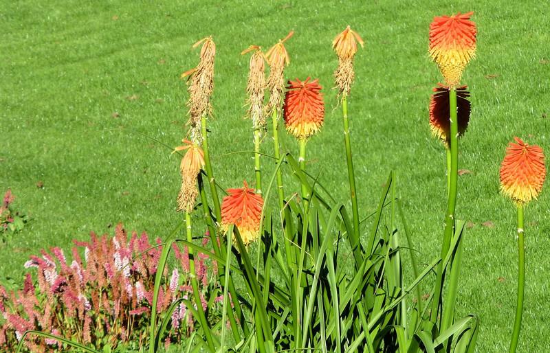 kylemore Abbey flowers.jpg