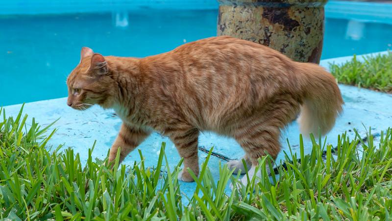 Florida-Keys-Key-West-Hemingway-Home-Cats-13.jpg