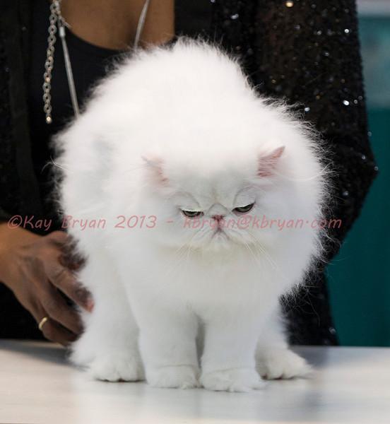 CatShow2014062_1.jpg