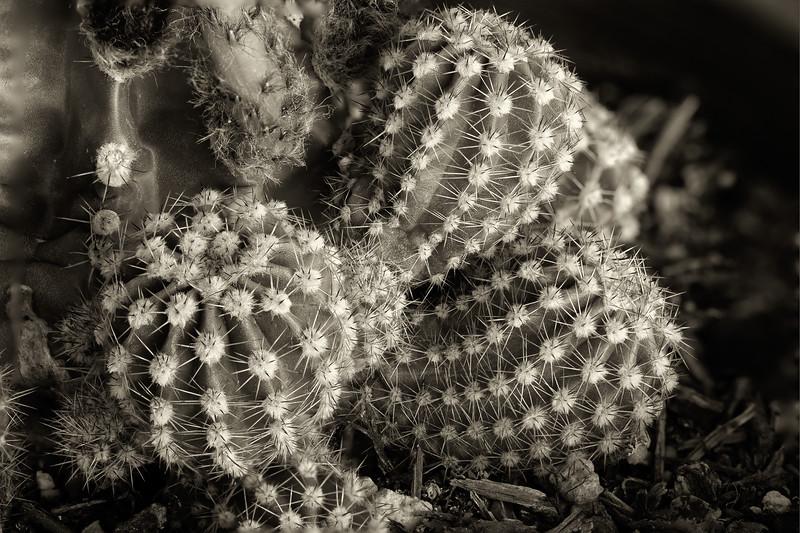 cactus -2.jpg
