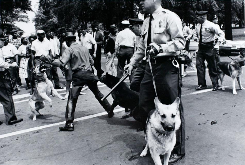 civil rights dogs1.jpg