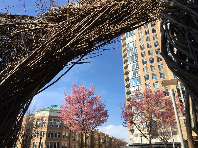 20160309 033 early spring at Reston Town Center.JPG