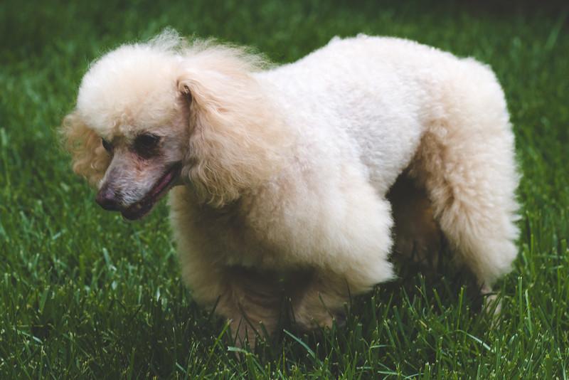 opal mike dogs (1 of 1)-109.jpg