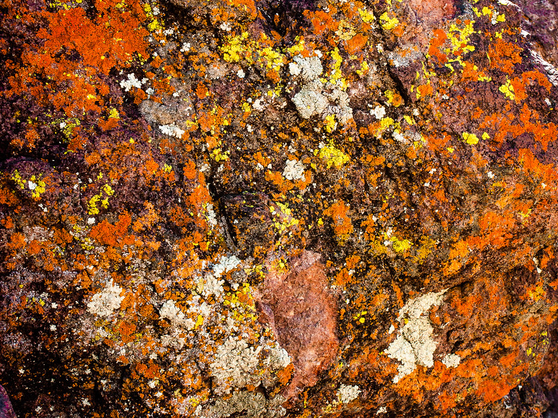 Lichen, Mojave County, Arizona, 2004