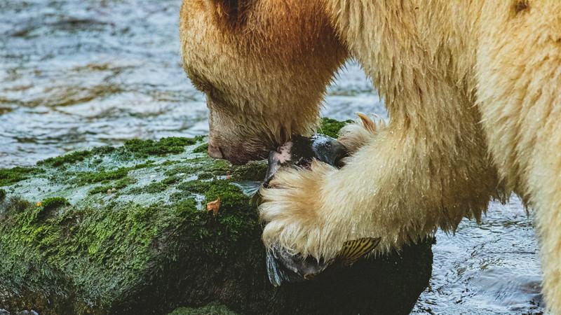 White Bear at Riordan Creek September 2019-5.jpg