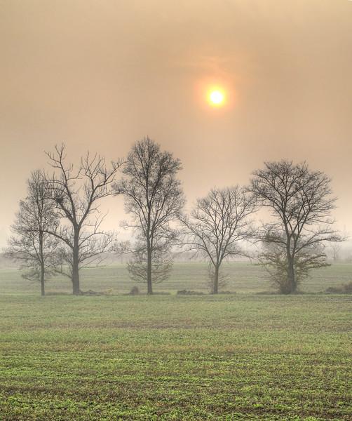 Almost Sunset - Fellegara, Scandiano, Reggio Emilia, Italy - December 4, 2011