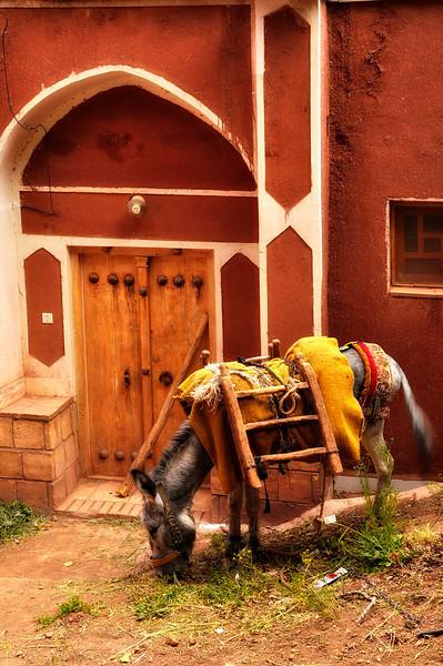 A Village donkey in front of an old house in Abyaneh, Iran