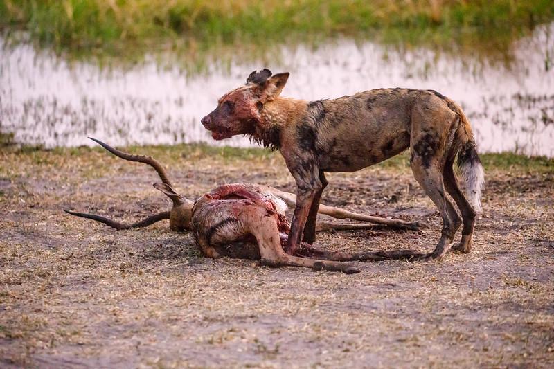 Botswana_0818_PSokol-1711.jpg