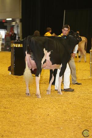 WDE Junior Holstein Int Cows 16