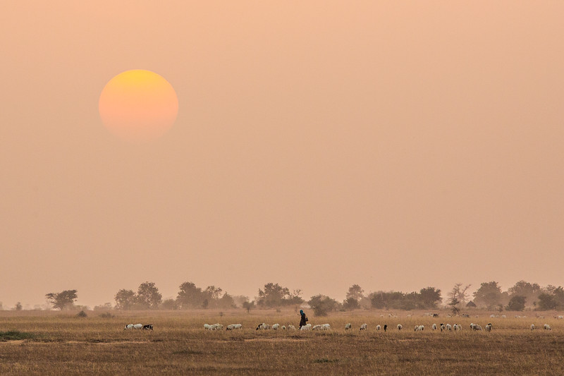 A Peul (also known as Fula) sheppard grazes his herd near Khelcom, Senegal. Some conservationists fear that the Islamic marabout who have obtained the political power in this region use fires to drive out the Peul, who traditionally graze their cattle on these lands.