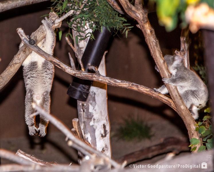 Koalafornia-35.jpg