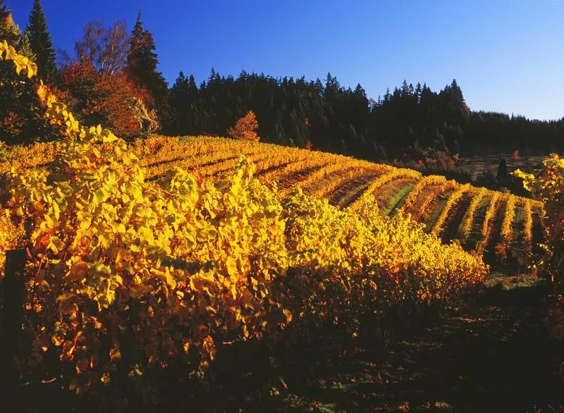 Corral Creek Vineyard  cropd enh sf.jpg