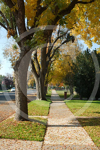 Lodi Neighborhoods in Autumn