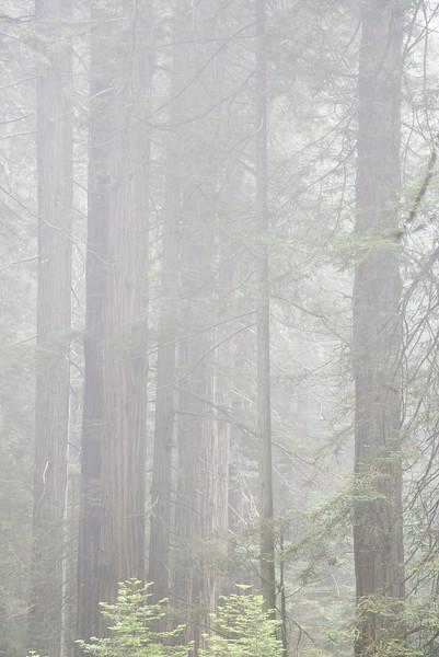 redwoodsFin29-1223.jpg